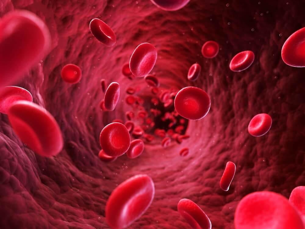 augmenter afflux sanguin vers la verge